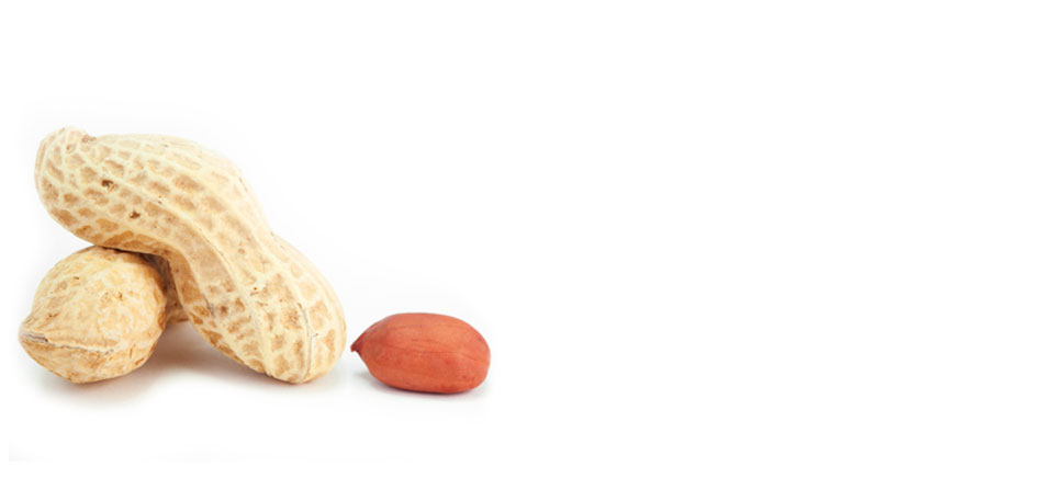 Peanuts on a white background