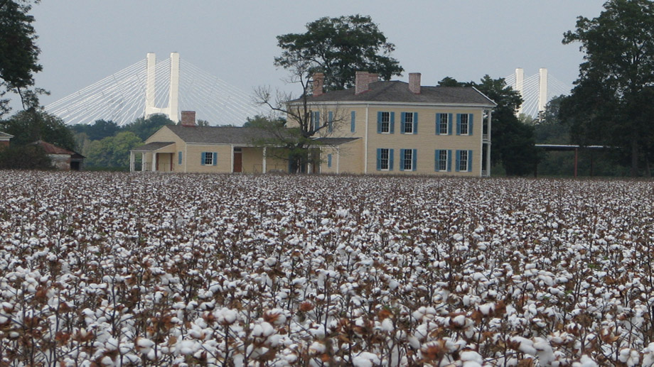 Lakeport Plantation with cotton