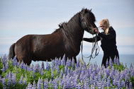 A woman holding a horses reins in a purple flower field